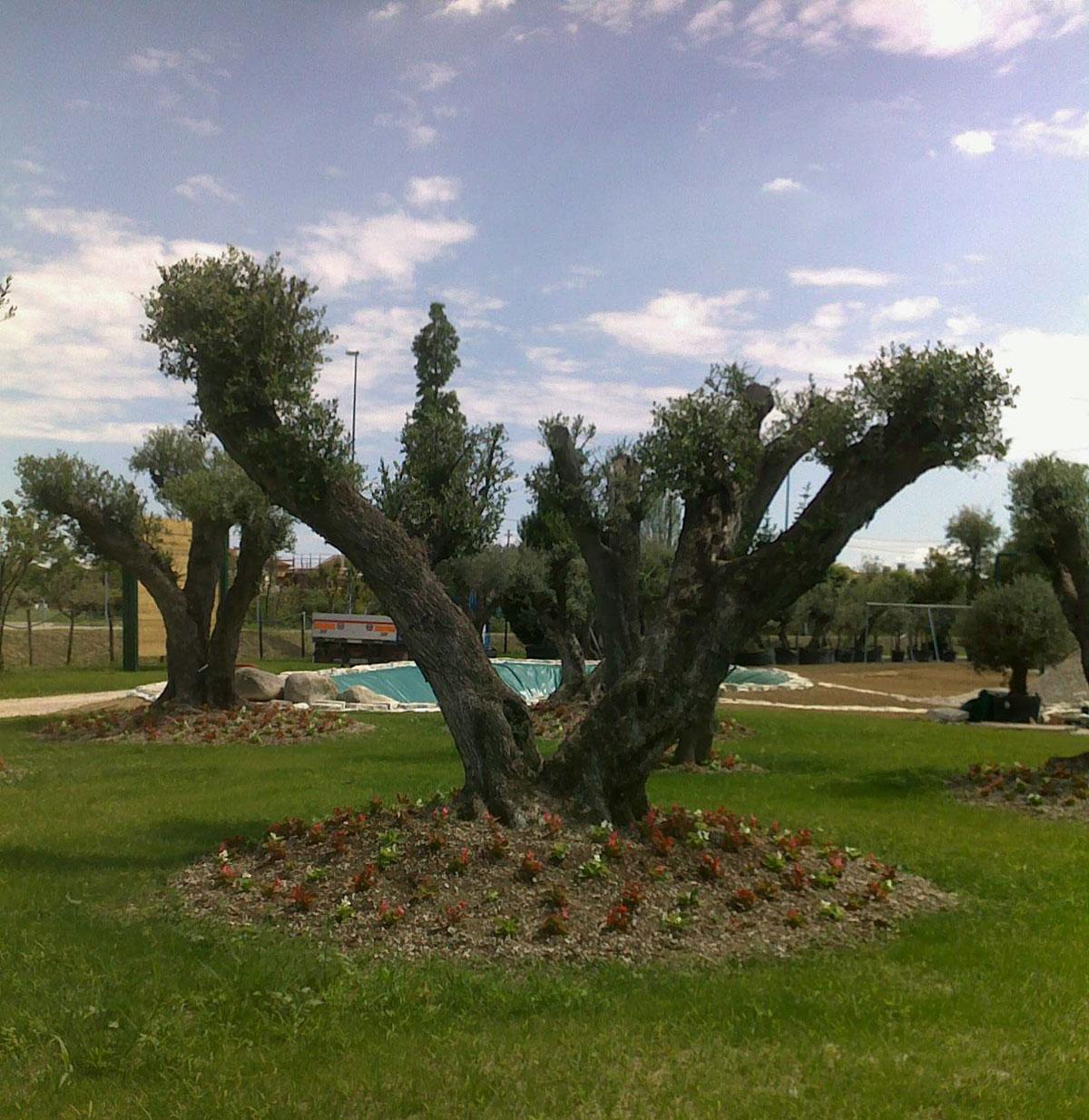 Alberi decorativi da giardino design casa creativa e - Alberi sempreverdi da giardino ...