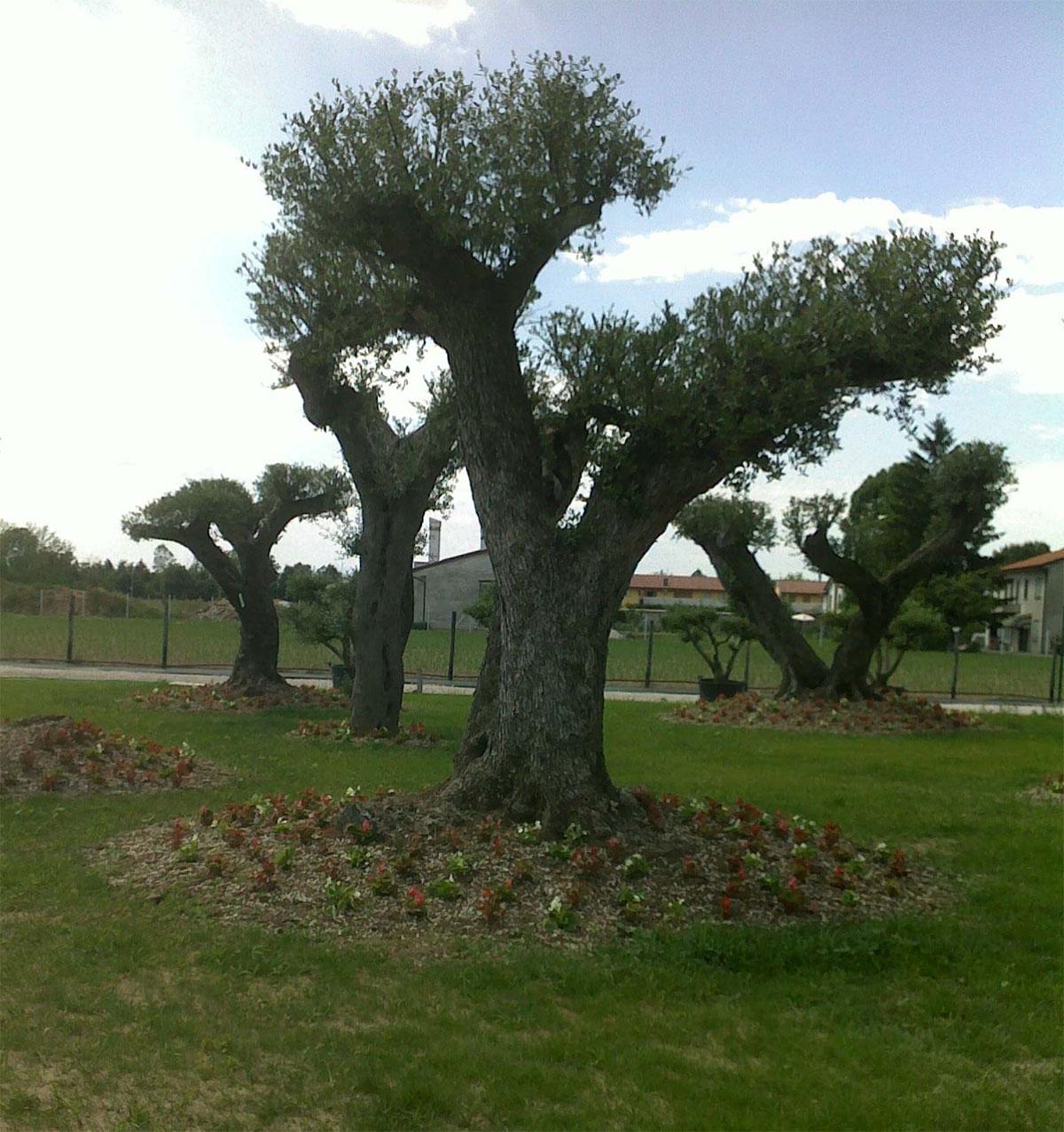 Foto alberi da giardino for Vivaio alberi da giardino
